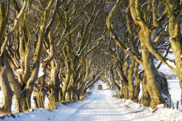 Ireland's Dark Hedges Is The Most Mystifyingly Cool Road Ever By