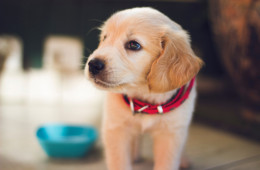 Have you guys seen this great pet first aid guide By Laura and Sarah